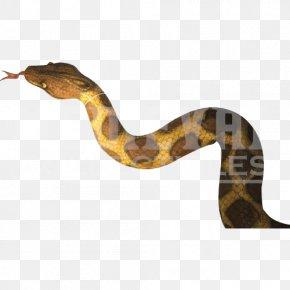 Snake - Boa Constrictor Rattlesnake Terrestrial Animal PNG