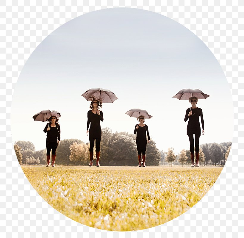 Umbrella, PNG, 800x800px, Umbrella Download Free