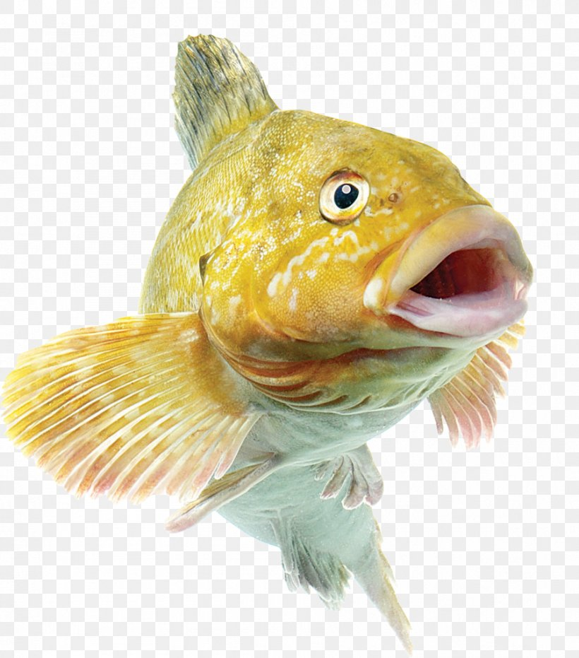 Common Carp Fishing Bait Angling, PNG, 901x1024px, Fish, Animal Source Foods, Bony Fish, Bony Fishes, Fauna Download Free