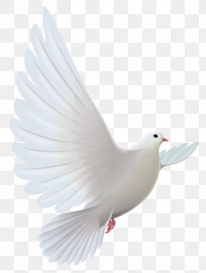 White Dove Transparent Clipart - Pigeons And Doves Bird Prayer Clip Art PNG