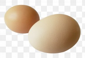 Egg - Egg Brown PNG