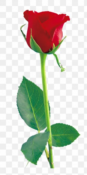Red Rose Clipart - Rose Icon PNG