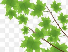 Maple Leaf Spring Vector Material Panels - Maple Leaf Green PNG