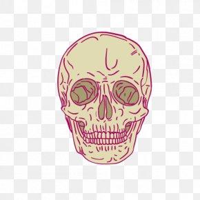 Vector Cartoon Skeleton - Skeleton Cartoon Skull PNG
