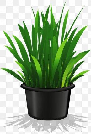 A Pot Of Green Grass - Houseplant Flowerpot Clip Art PNG