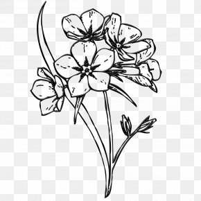 Flower - Floral Design Flower Image Drawing Clip Art PNG