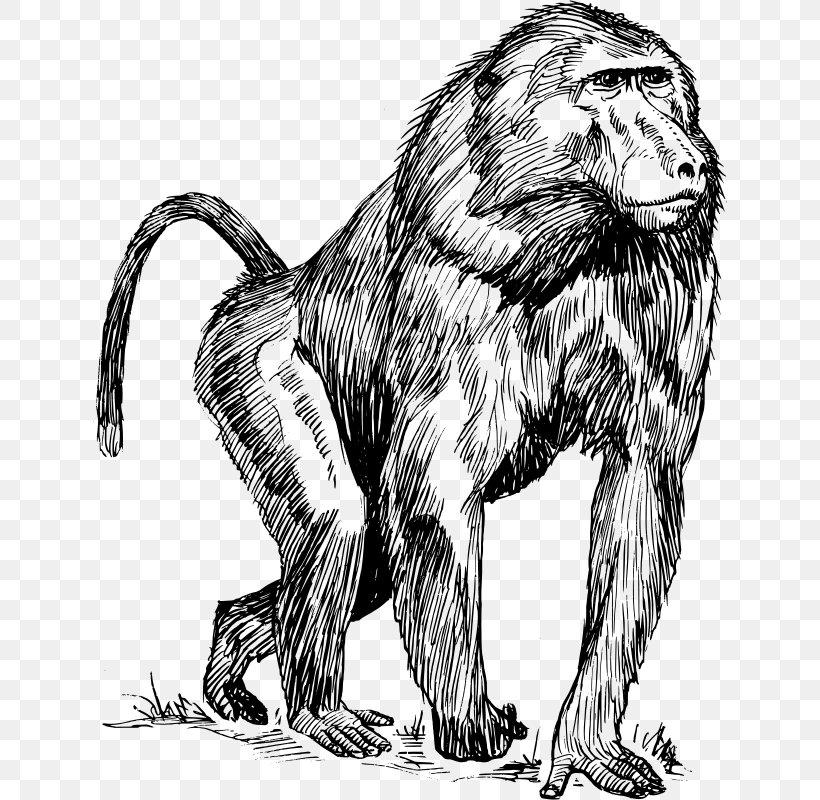 Mandrill Primate Hamadryas Baboon Ape Chimpanzee, PNG, 634x800px, Mandrill, Ape, Art, Baboons, Big Cats Download Free
