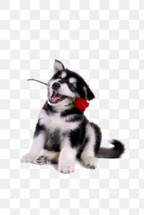 Dog,puppy,pet,animal - Dog Puppy Hamster Gerbil Ferret PNG