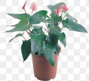 Aloe - Flowerpot Houseplant Clip Art PNG