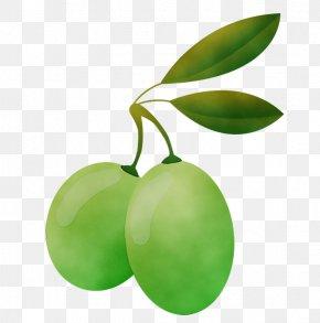 Food Flowering Plant - Green Leaf Plant Fruit Tree PNG