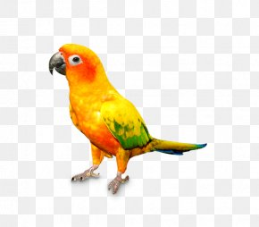 Parrot - Cat Parrot Bird Dog Pet PNG