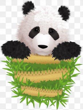 Vector Cute Panda Rare - Giant Panda Cuteness Illustration PNG