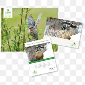 Owl - Animal Owl Bald Eagle Bird Gray Wolf PNG