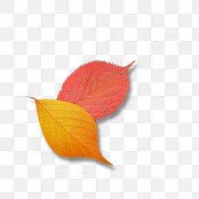 Leaf - Leaf Petal Google Images PNG