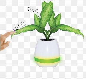 Pot Plant - Beethoven's Piano Sonatas Musical Instruments YouTube PNG