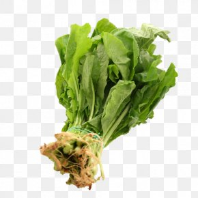 Vegetable - Romaine Lettuce Rapini Spring Greens Vegetarian Cuisine Turnip PNG