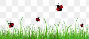 Grass With Ladybugs Clipart Picture - Ladybird Stock Photography Clip Art PNG