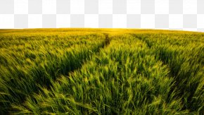 Field Views - Sunset Landscape Panorama Meadow Stock Photography PNG