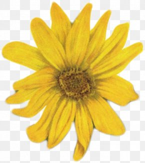 Flower - Flower Yellow Stock Photography Clip Art PNG