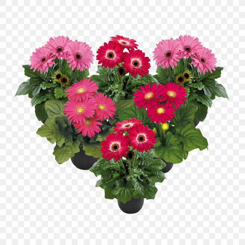 Cut Flowers Flower Bouquet Transvaal Daisy Floral Design, PNG, 1772x1772px, Cut Flowers, Annual Plant, Artificial Flower, Chrysanthemum, Chrysanths Download Free
