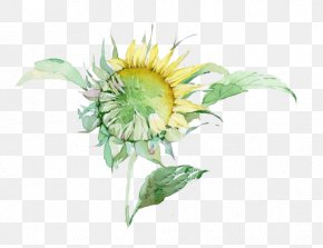 Watercolor Sunflower - Watercolor Painting PNG