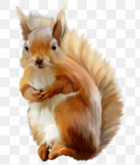 Cute Squirrel - Eastern Gray Squirrel Photography Clip Art PNG