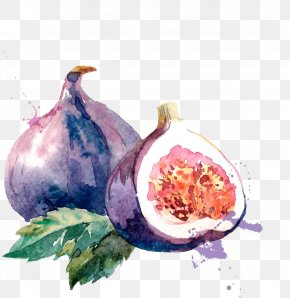 Watercolor Without Melon And Leaves - Common Fig Watercolor Painting Drawing Illustration PNG
