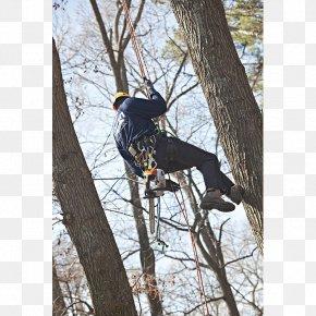 Saw Chain - Chainsaw Stihl Hand Tool Arborist Wood PNG