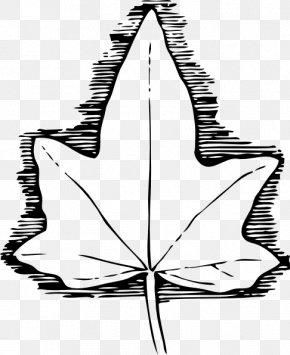 Leaf Pattern Cliparts - Ivy Leaf Vine Clip Art PNG