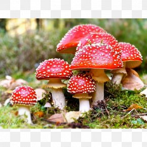 Mushroom - Amanita Muscaria Death Cap Edible Mushroom Fungus PNG