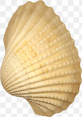 Shell - Cockle Seashell Conchology PNG
