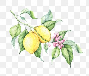 Lemonade - Lemonade Clip Art Watercolor Painting Drawing PNG