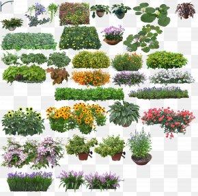 Creative Flower - Rendering PNG