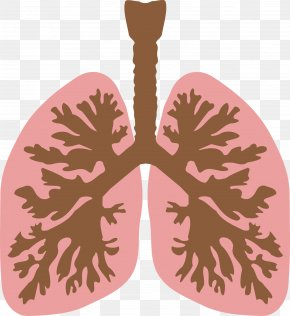 Lungs - Lung Clip Art PNG