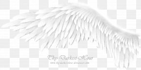 Angel Wings - Monochrome Photography Black And White Brush PNG