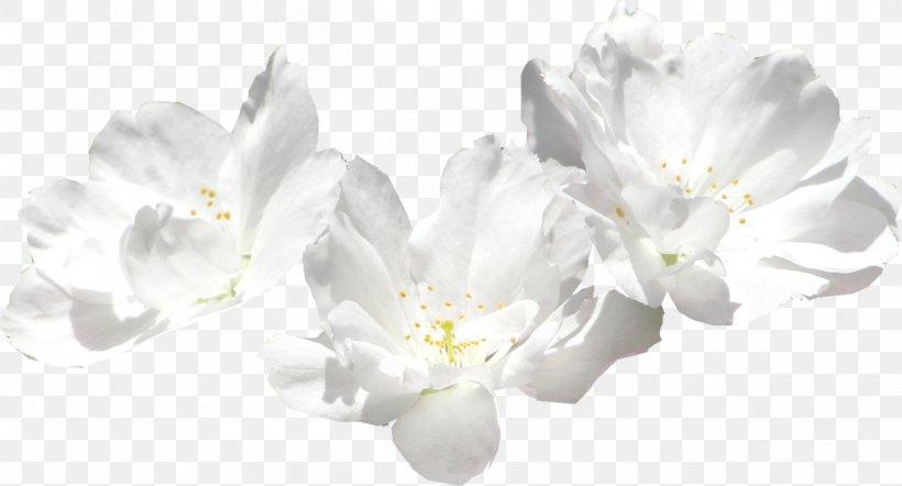 Cut Flowers Chrysanthemum Common Sunflower Transvaal Daisy, PNG, 1200x647px, Cut Flowers, Blossom, Branch, Cherry Blossom, Chrysanthemum Download Free
