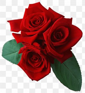 Rose Image Picture Download - Rose Clip Art PNG
