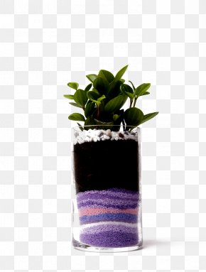Green Leaves Of Plants And Colored Sand Buckle-free Material - Flowerpot Plant Sand Computer File PNG