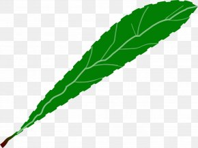 Serrated Leaf Edge - Leaf Green Clip Art PNG