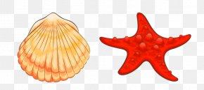Starfish - Beach Cartoon PNG
