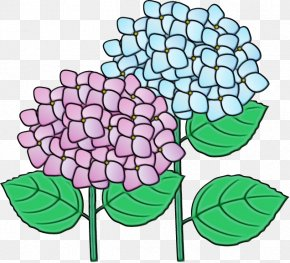 Floral Design Clip Art Cut Flowers French Hydrangea PNG