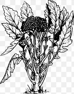 Broccoli - Broccoli Slaw Vegetable Drawing PNG
