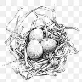 Bird's Nest With Egg - Edible Birds Nest Egg PNG