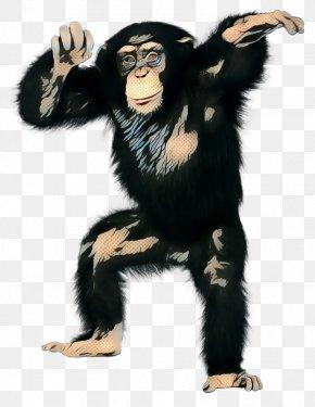 Costume Common Chimpanzee - Common Chimpanzee Costume Clip Art PNG