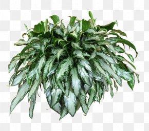 Plants - Plant Vine Hanging Basket Bougainvillea Alocasia PNG