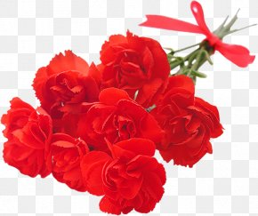 Mother's Day Specials - Cut Flowers Mother's Day Centifolia Roses Garden Roses PNG