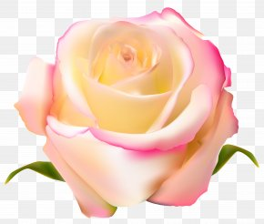 Rose Transparent Clip Art Image - Garden Roses Beach Rose Centifolia Roses PNG