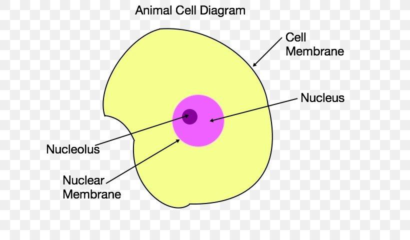 33 Animal Cell Diagram 5th Grade - Wiring Diagram Database