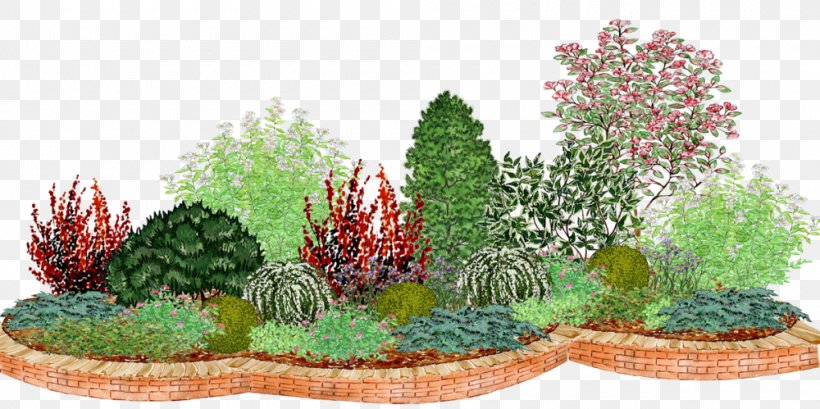 Ornamental Plant Tree Garden Conifers Bedding Png 1000x499px