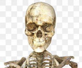 Skeleton - Skull Icon PNG